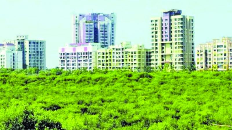 There are 15,880 hectares of mangrove land across Maharashtra.