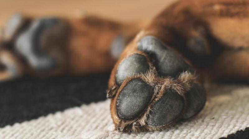 Local authorities said that James could've done a lot to help the dog but deliberately chose to ignore him (Photo: Pixabay)
