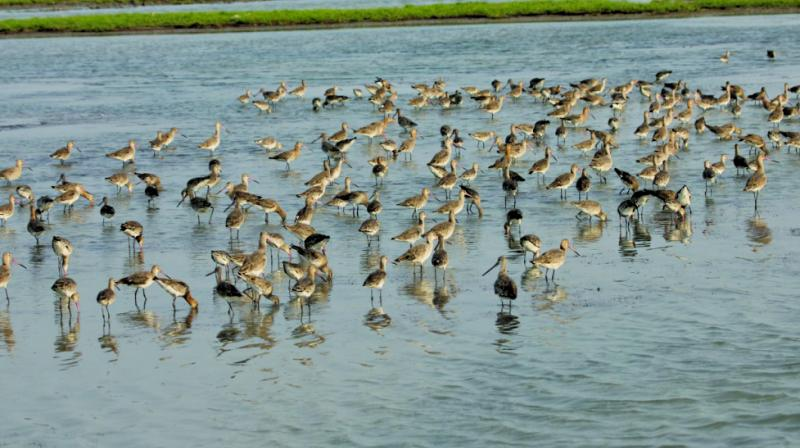 File image of water birds in the city.