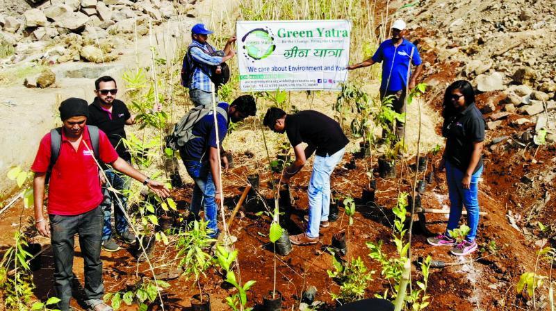 The team planting saplings