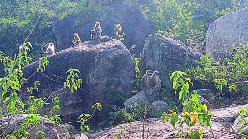 Trapped monkeys sit on top of rocks