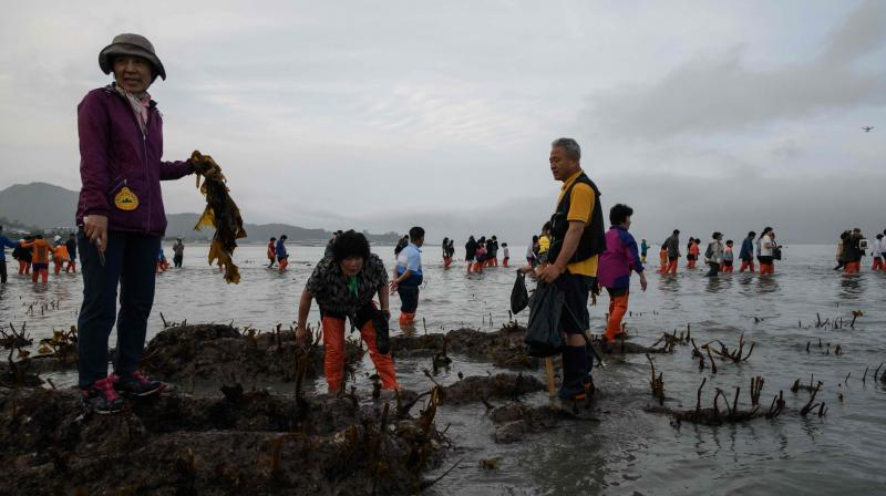 The four-day festival, the dates of which change slightly each year, is a popular attraction for both tourists and locals - many of whom take the opportunity to dig for shell fish and collect seaweed. (Photo: AFP)
