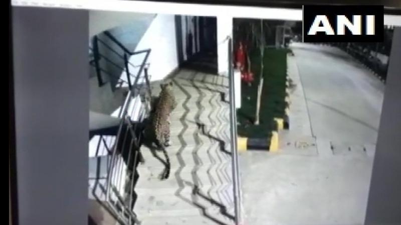 Panther was first seen in the parking area of Korum Mall in Thane by passersby, following which they alerted the police and forest officials. (Photo: ANI)