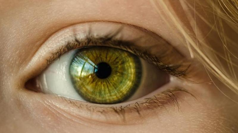 There was little evidence to suggest that myopia led people to remain in education for longer. (Photo: Pixabay)