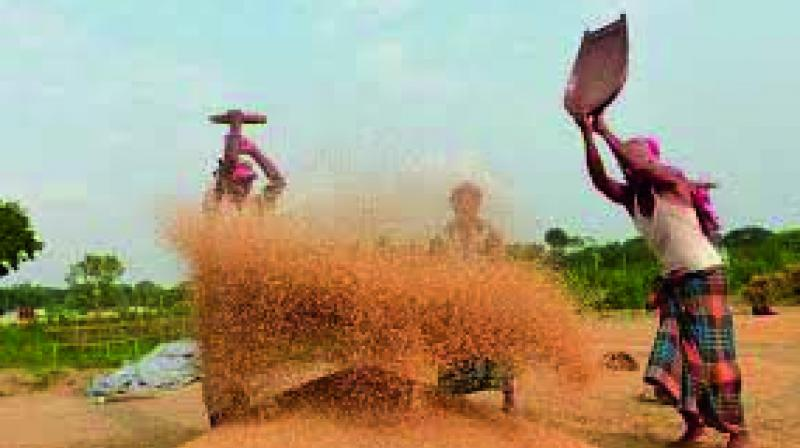 A file picture shows Bangladeshi workers sieving rice in a village near Dhaka. (Photo: AFP)