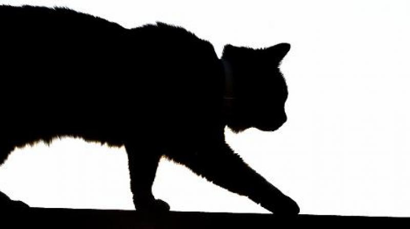 He was allegedly caught on CCTV camera throwing the kittens into fire one by one and the kittens escaping. (Photo: Representative Image)