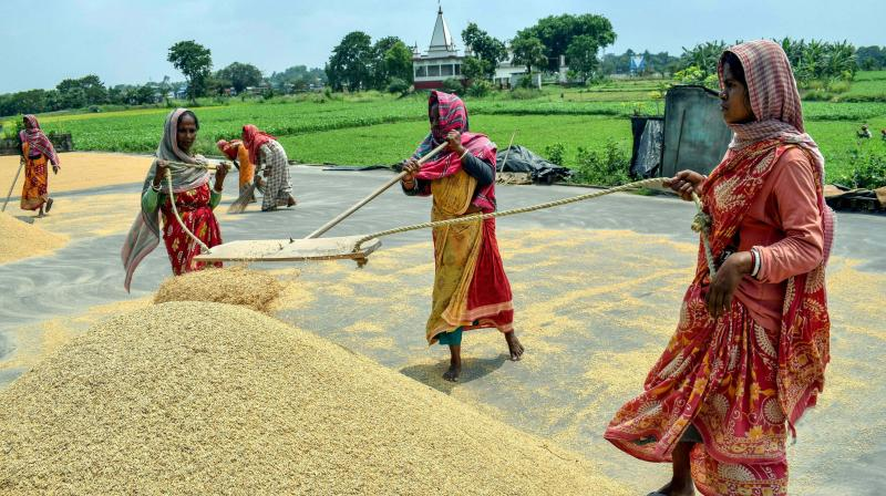 Farmers winnow rice grain after harvesting them at a field, during the ongoing COVID-19 lockdown, in Assam