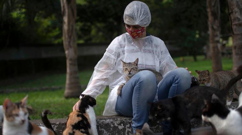 A worker caresses cats at the Public Animal Shelter of the Guaratiba neighborhood, in Rio de Janeiro, Brazil. (AFP)