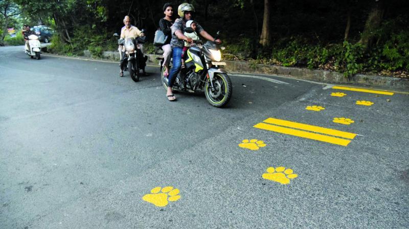 An artist paints leopard footprints to create awareness about safety of wild animals at Yeoor hills on Thursday. (Photo: Deepak Kurkunde)