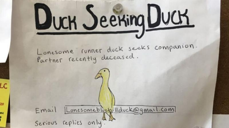 A 31-year-old special education teacher, drew up a singles ad for Yellow Duck and placed it on a community bulletin board at a local grocery store. (Photo: AP)