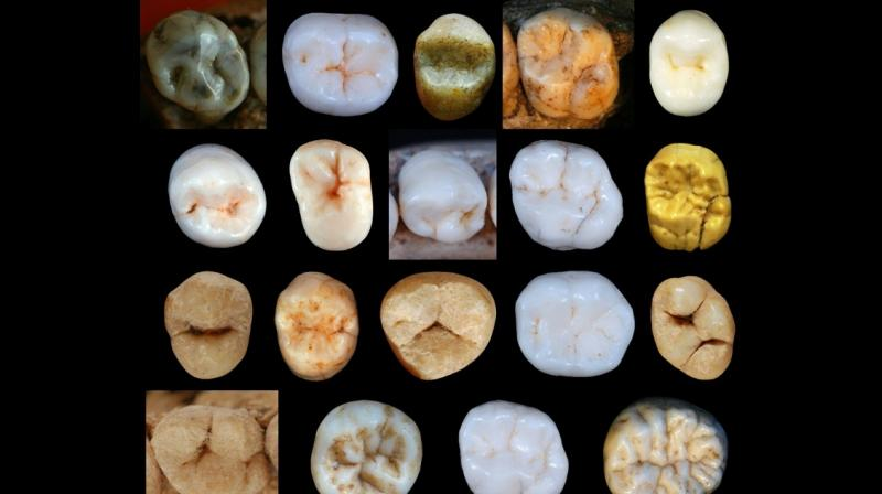 The study by Aida Gomez-Robles from University College London proposes that the two species' last common ancestor may have lived 800,000 years ago, entering a debate that is hotly contested among anthropologists.