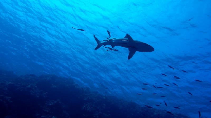 They wrestled the goliath until it finally spit out the shark (Photo: Pixabay)
