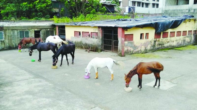 Horses seized by the police.