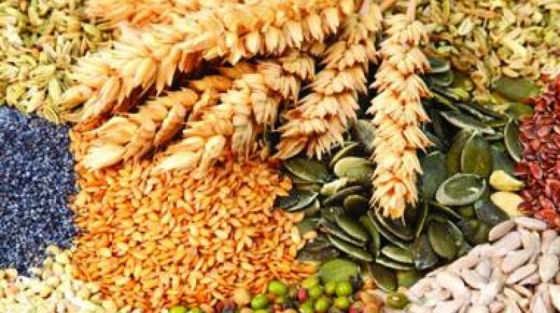 Swadeshi seeds have been bred for nutrition and health, taste and quality. (Representational image)
