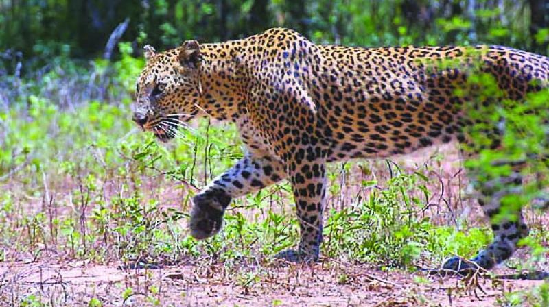 Uttarakhand has seen over 200 human-animal conflicts.