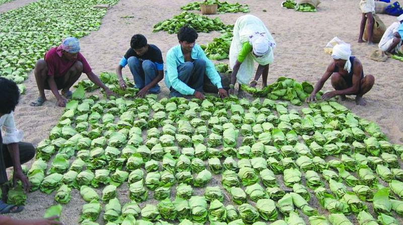 Villagers making kendu leaf bundles in Odisha.