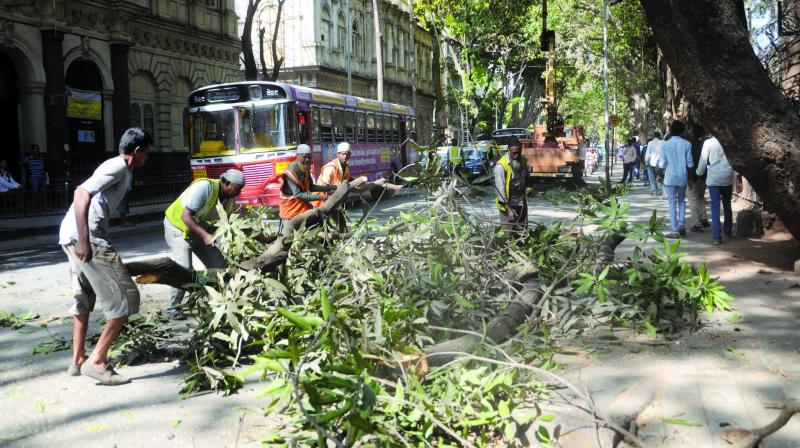 File picture of civic workers pruning trees.