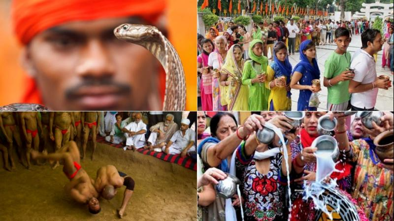 Every year, the wrestlers offer prayers and hold bouts to mark the festival which is primarily dedicated to worship of snakes. (Photo: AP)