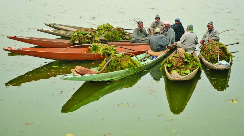 Members of Kashmir's Lakes and Waterways Authority collect weeds lying on the surface of Dal Lake. (Photo: AFP)