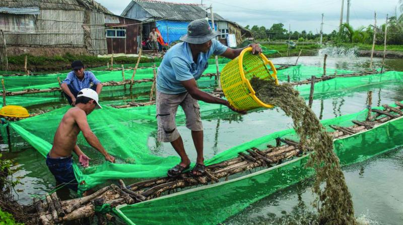 Farmers making a fortune in shrimp farming