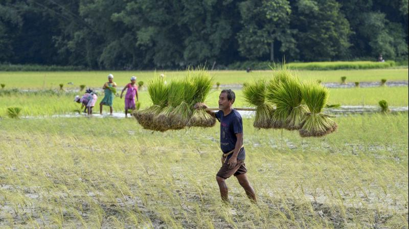 A farmer works at his field. — PTI representational picture