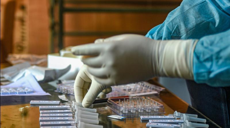 A medic arranges samples for COVID19 testing in Srinagar. — PTI photo