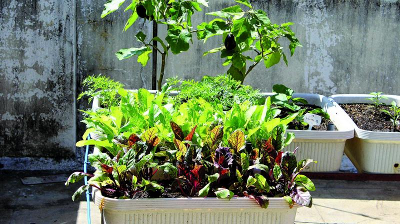The Delhi Parks and Gardens Society (DPGS) was directed to ensure free distribution of saplings so that the plantation drive could be carried out smoothly. (Photo: File | Representational)