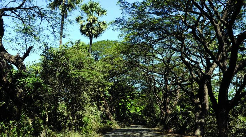 While the total forest cover recorded for the Mumbai suburban area summed up to 140 sq km, it includes 64 sq km of mangrove area.