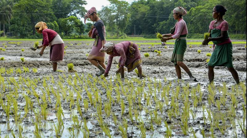 "Rockefeller Foundation has chosen Naandi Foundation as one of 10 ""visionaries"" in the world for the Food Vision 2050 prize. (PTI Photo)"