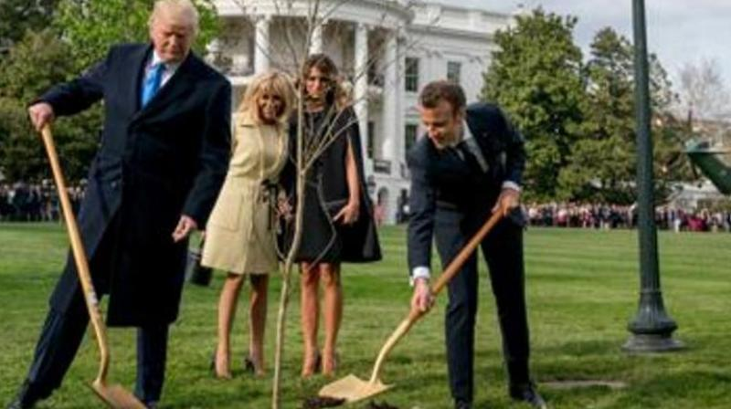 The French leader had offered the young oak to Trump during a state visit to Washington in 2018, and the two shovelled dirt around it under the watchful eyes of their wives — and cameras from around the world. (Photo: AP)
