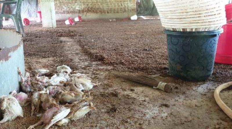 Rajanikant Satpathy's flood-damaged poultry unit in Odisha's Jajpur district.