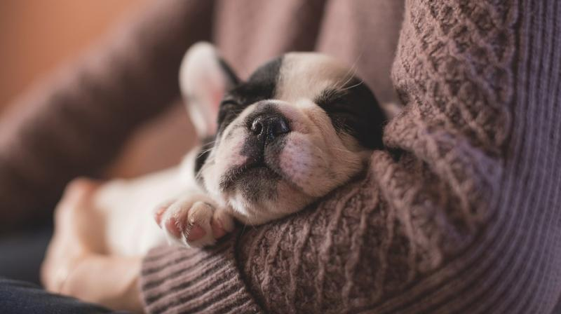 Post-mortem report confirmed the rape and subsequent death of the puppy due to excessive bleeding and shock. (Photo: Pixabay)
