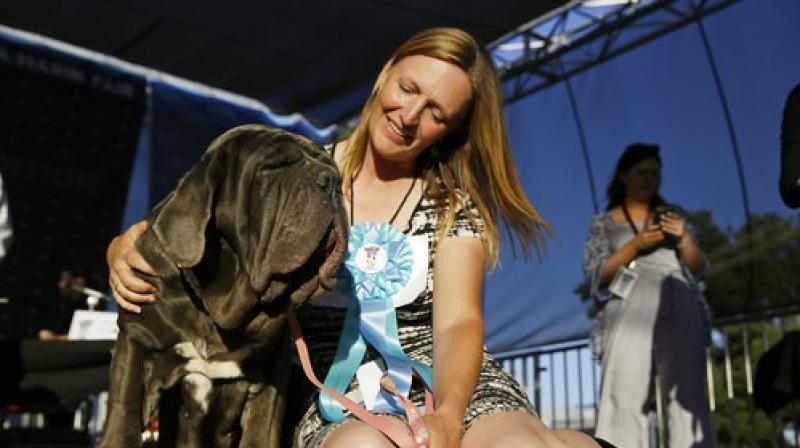 Shirley Zindler, of Sebastopol, Calif., sits with her dog Martha, a Neapolitan mastiff, who won the World's Ugliest Dog Contest at the Sonoma-Marin Fair on Friday, June 23, 2017.(AP Photo/Eric Risberg)