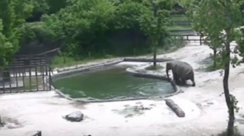 The two adult elephants can be seen trying to help the drowning calf (Photo: Youtube)