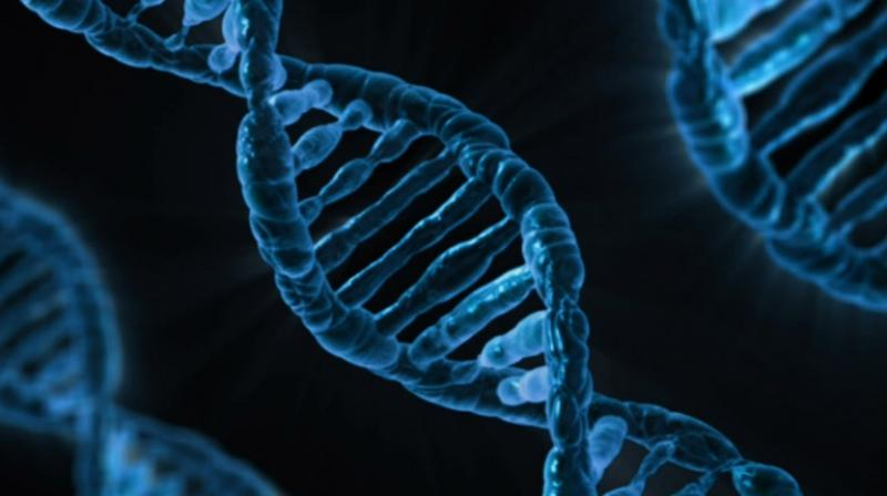 Genetic sequencing tools can reveal a large number of mutations in a person's genome, but diagnosis typically focuses on identifying one primary mutation as the cause of a disorder. (Photo: Pixabay)