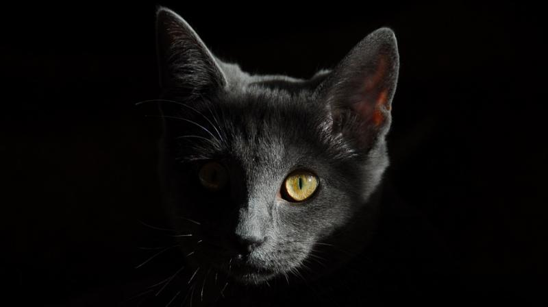 Not all animals are perhaps meant to be kept as pets and keeping them often lead to darker consequences (Photo: Pixabay)
