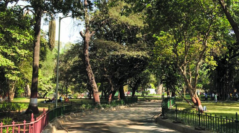 A click from Rani Baug
