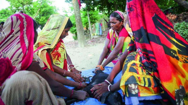 Poor local women in Bihar are being trained as Pashu Sakhis to care for goats and improve their production and productivity.