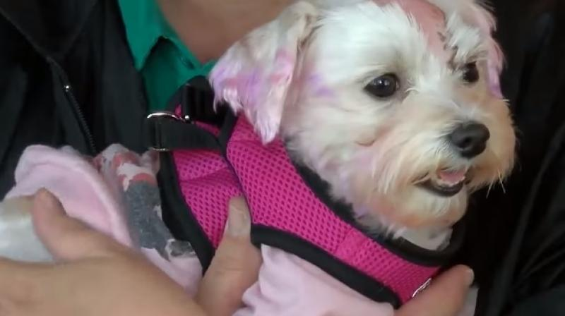 They had to shave off her fur to assess damage and was horrified at her condition (Photo: YouTube)