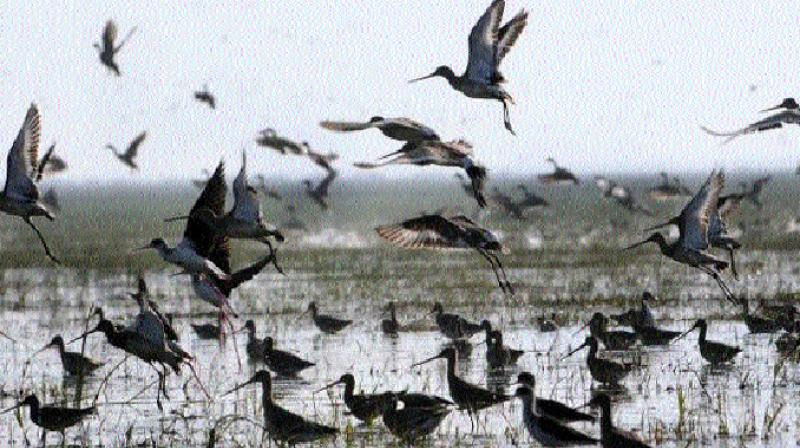 A total of 8,93,390 birds of 147 species were spotted in Chilika, Asia's largest brackish water lake, this winter in comparison to 9,47,119 birds during 2016-17