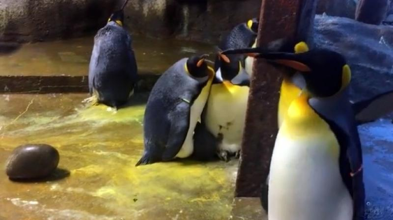 """The parents disappeared and the kid was simply kidnapped. It was a pair of gay males who had snatched it and was stood with it."""" (Facebook screengrab/ Odense Zoo)"""