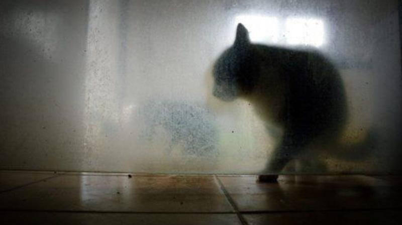 Cat bites can be damaging through infections and may lead to permanent disabilities (Photo: AFP)