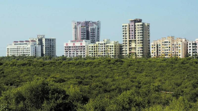 The state's mangrove cell aims to have a bird's eye view of the city's mangroves to keep a check on intruders.