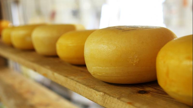 Cheese and Music are much relative to each other. (Photo: Pixabay)