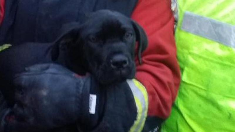 The puppy, named Buster, fell unconscious after inhaling smoke in a house fire. (Photo: Billesley Fire Department Twitter)
