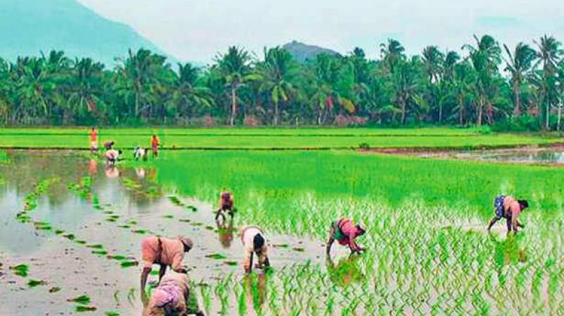 Agriculture Ministry wants to use modern technologies to get the crop yield figures faster and accurately for payment of crop insurance claims.