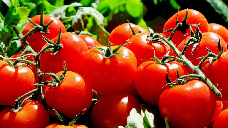 His remarks came after the prices of tomatoes touched Rs300 per kg, creating panic among the people as the vegetable is a key ingredient of every kitchen. (Representational Image)