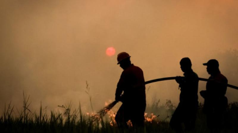 Massive jungle areas in Sumatra and Borneo island are ablaze as thousands of personnel battle to quell the fires, frequently started to clear land for crop plantations. (AFP)