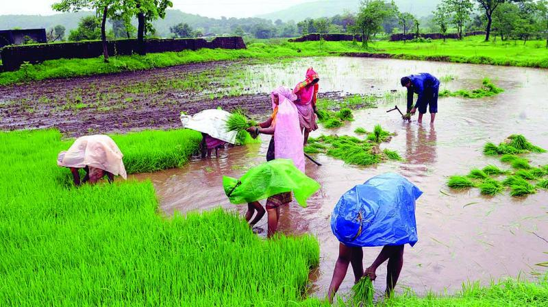 Total Kharif area sown dropped by 17.67 per cent at 1,009.50 lakh hectares, primarily due to rice.