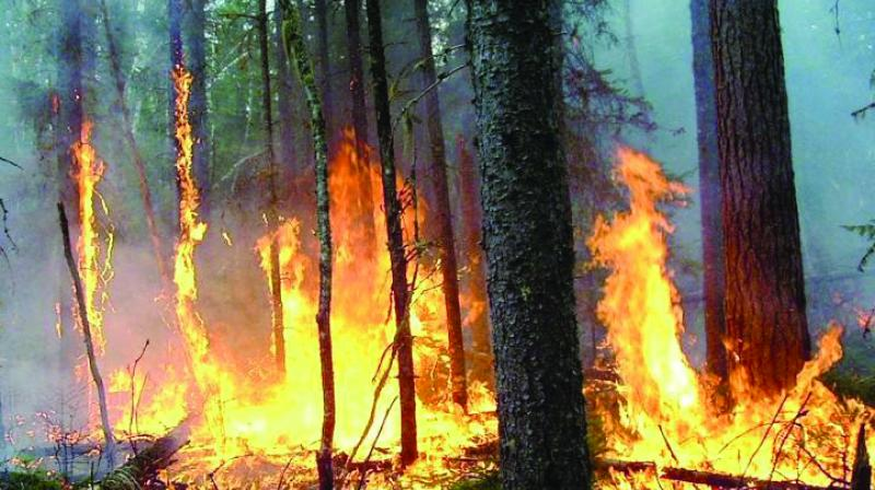 Fire incidents in Maharashtra forests last year were 4,675 against 3,888 in the preceding year.